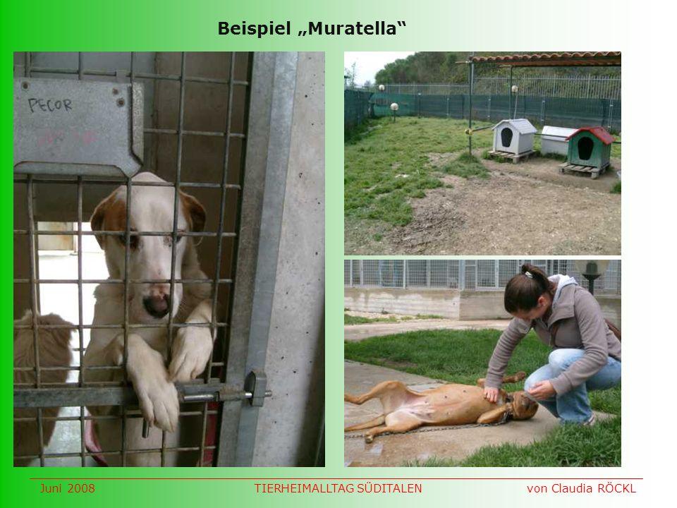 Beispiel Muratella Juni 2008 von Claudia RÖCKLTIERHEIMALLTAG SÜDITALEN
