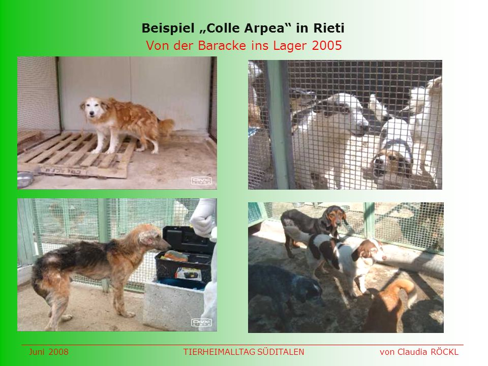 Von der Baracke ins Lager 2005 Beispiel Colle Arpea in Rieti Juni 2008 von Claudia RÖCKLTIERHEIMALLTAG SÜDITALEN