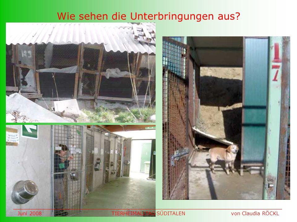 Wie sehen die Unterbringungen aus Juni 2008 von Claudia RÖCKLTIERHEIMALLTAG SÜDITALEN
