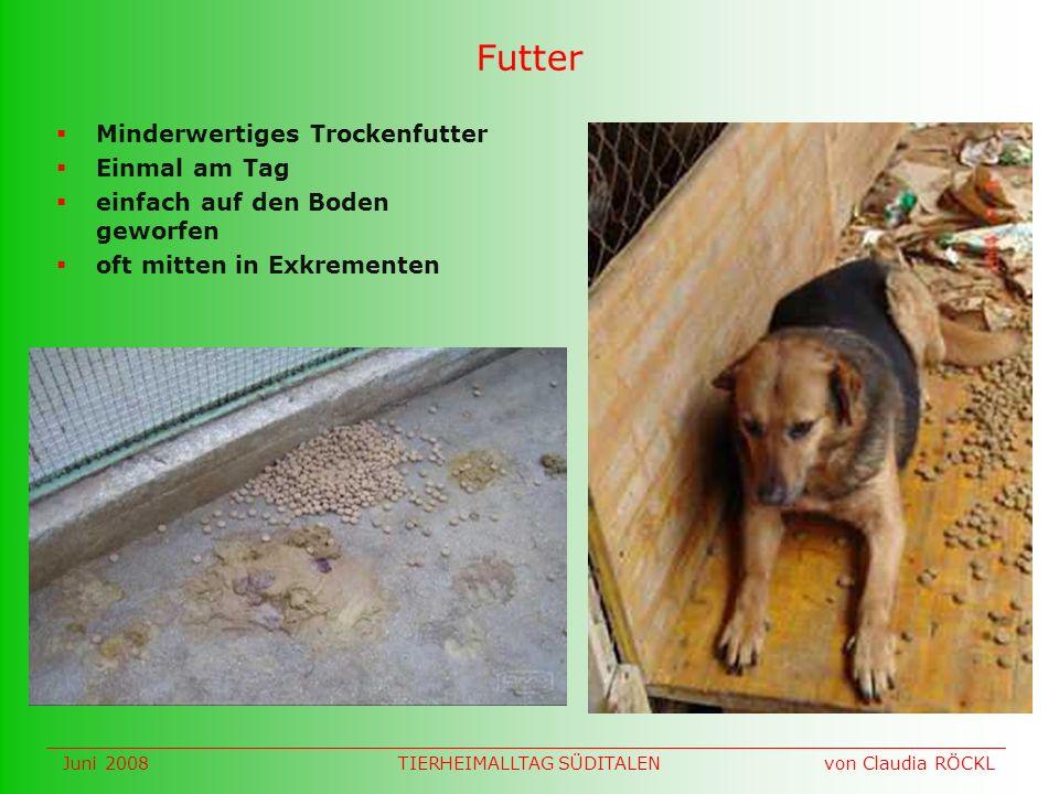 Futter Minderwertiges Trockenfutter Einmal am Tag einfach auf den Boden geworfen oft mitten in Exkrementen Juni 2008 von Claudia RÖCKLTIERHEIMALLTAG SÜDITALEN