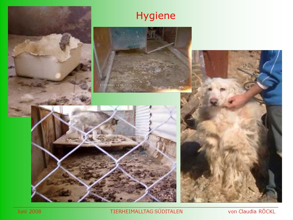 Hygiene Juni 2008 von Claudia RÖCKLTIERHEIMALLTAG SÜDITALEN