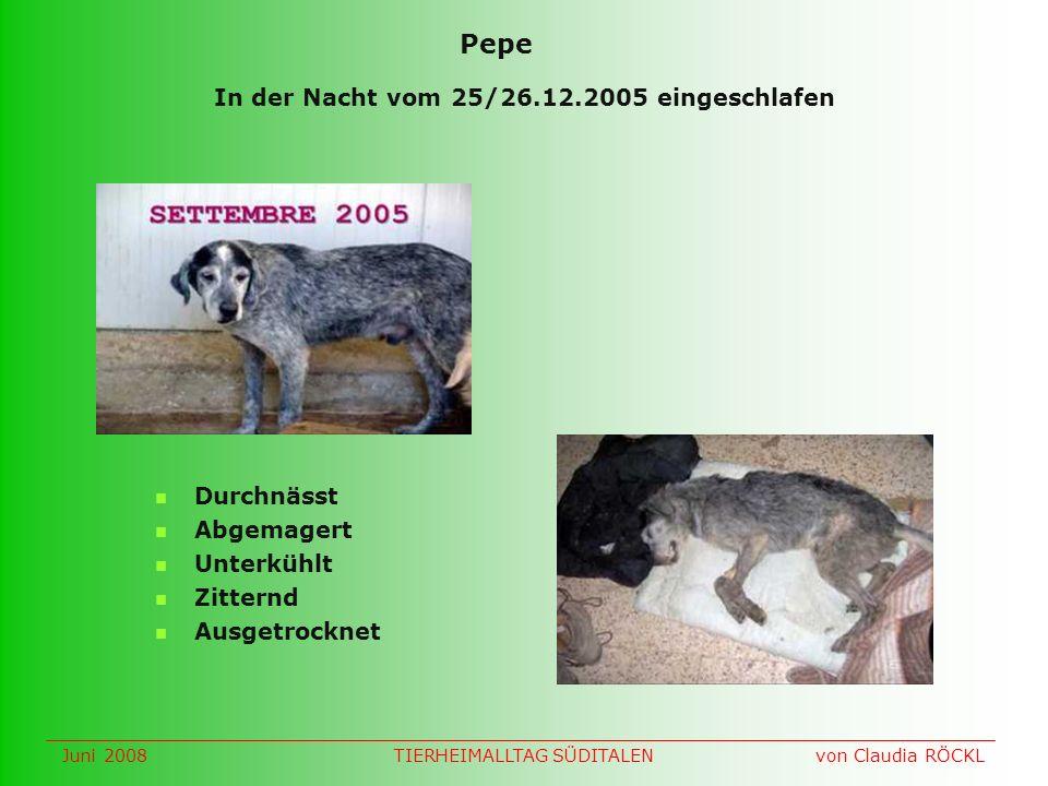 In der Nacht vom 25/26.12.2005 eingeschlafen Durchnässt Abgemagert Unterkühlt Zitternd Ausgetrocknet Pepe Juni 2008 von Claudia RÖCKLTIERHEIMALLTAG SÜDITALEN
