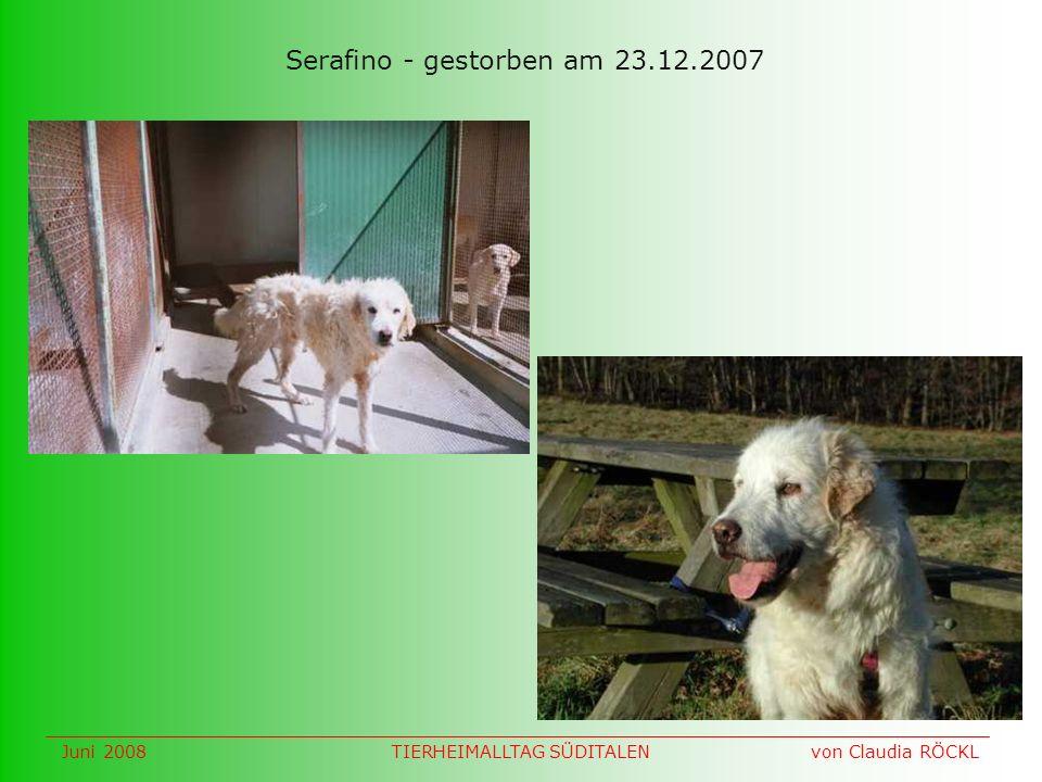 Serafino - gestorben am 23.12.2007 Juni 2008 von Claudia RÖCKLTIERHEIMALLTAG SÜDITALEN
