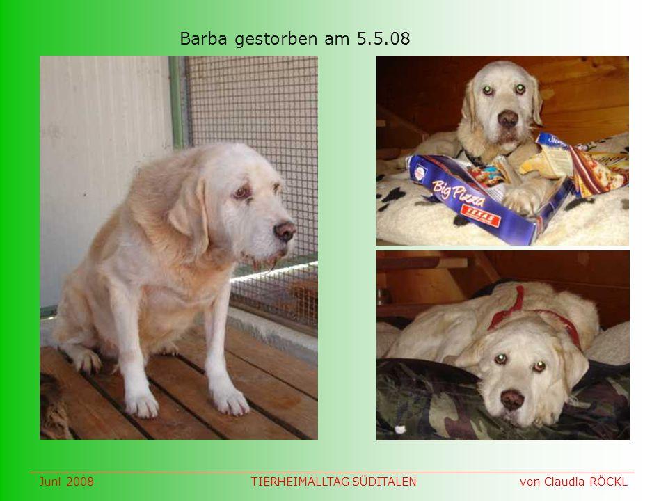 Barba gestorben am 5.5.08 Juni 2008 von Claudia RÖCKLTIERHEIMALLTAG SÜDITALEN