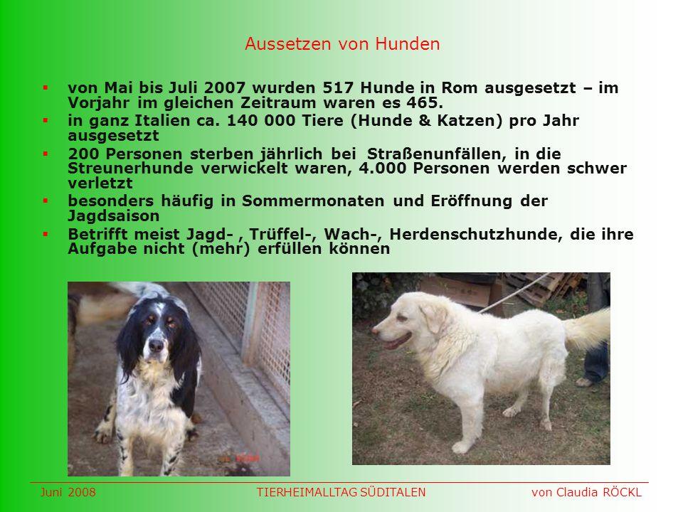 Aussetzen von Hunden von Mai bis Juli 2007 wurden 517 Hunde in Rom ausgesetzt – im Vorjahr im gleichen Zeitraum waren es 465.