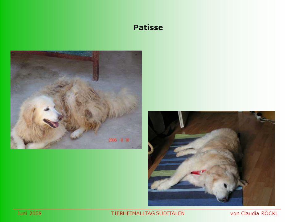 Patisse Juni 2008 von Claudia RÖCKLTIERHEIMALLTAG SÜDITALEN