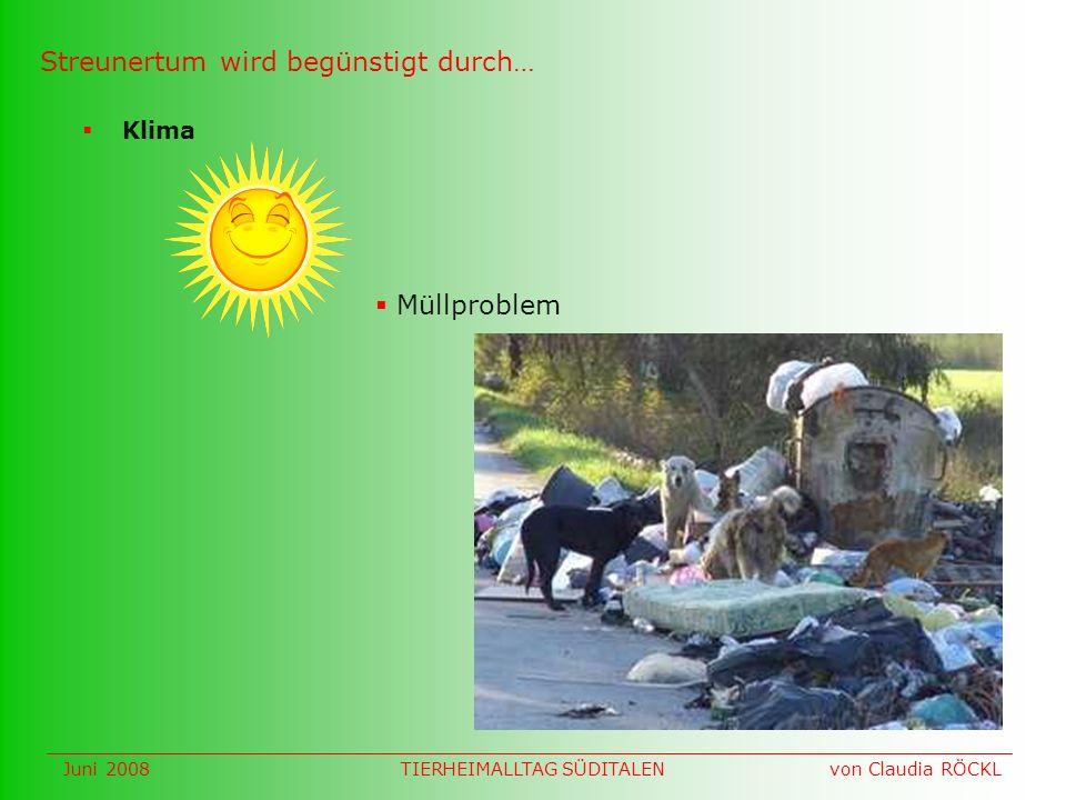 Klima Streunertum wird begünstigt durch… Müllproblem Juni 2008 von Claudia RÖCKLTIERHEIMALLTAG SÜDITALEN