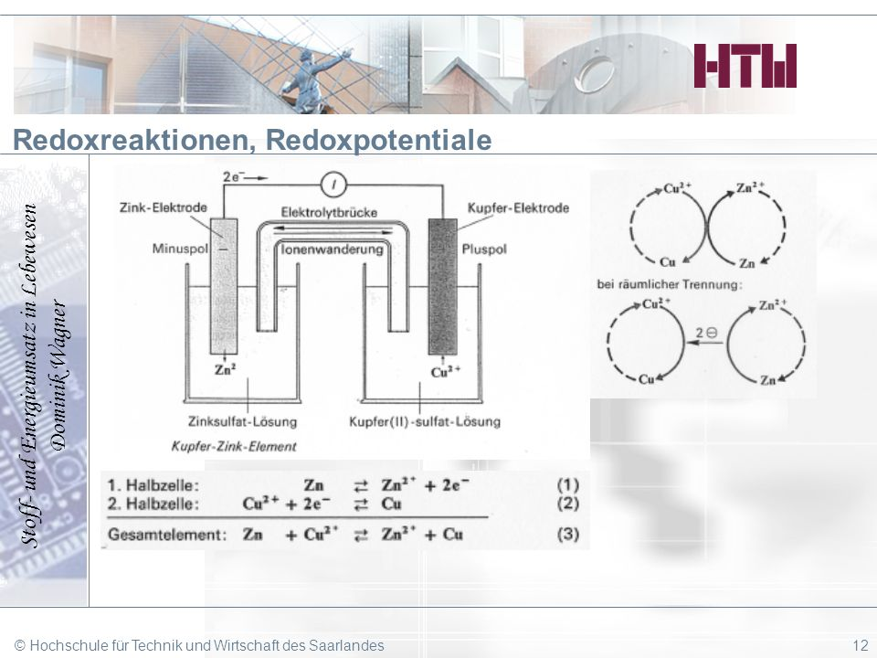 Stoff- und Energieumsatz in Lebewesen Dominik Wagner © Hochschule für Technik und Wirtschaft des Saarlandes12 Redoxreaktionen, Redoxpotentiale