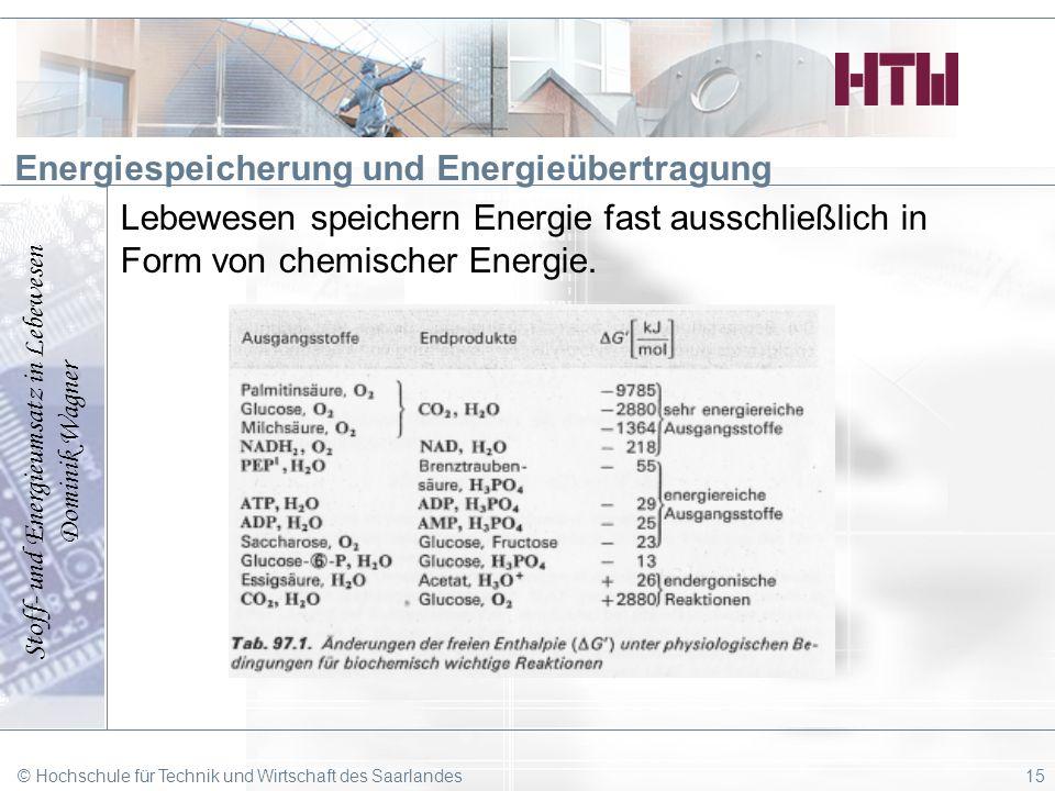 Stoff- und Energieumsatz in Lebewesen Dominik Wagner © Hochschule für Technik und Wirtschaft des Saarlandes15 Energiespeicherung und Energieübertragun