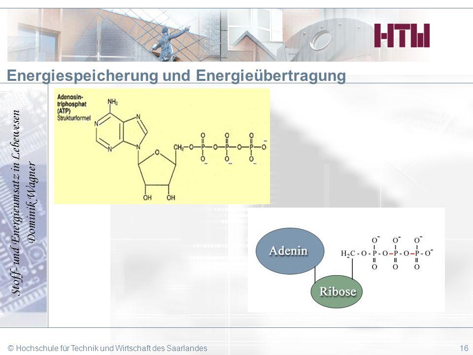 Stoff- und Energieumsatz in Lebewesen Dominik Wagner © Hochschule für Technik und Wirtschaft des Saarlandes16 Energiespeicherung und Energieübertragun