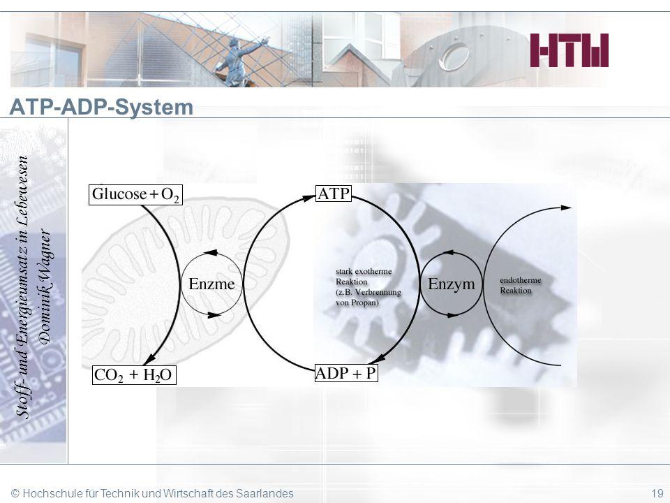 Stoff- und Energieumsatz in Lebewesen Dominik Wagner © Hochschule für Technik und Wirtschaft des Saarlandes19 ATP-ADP-System