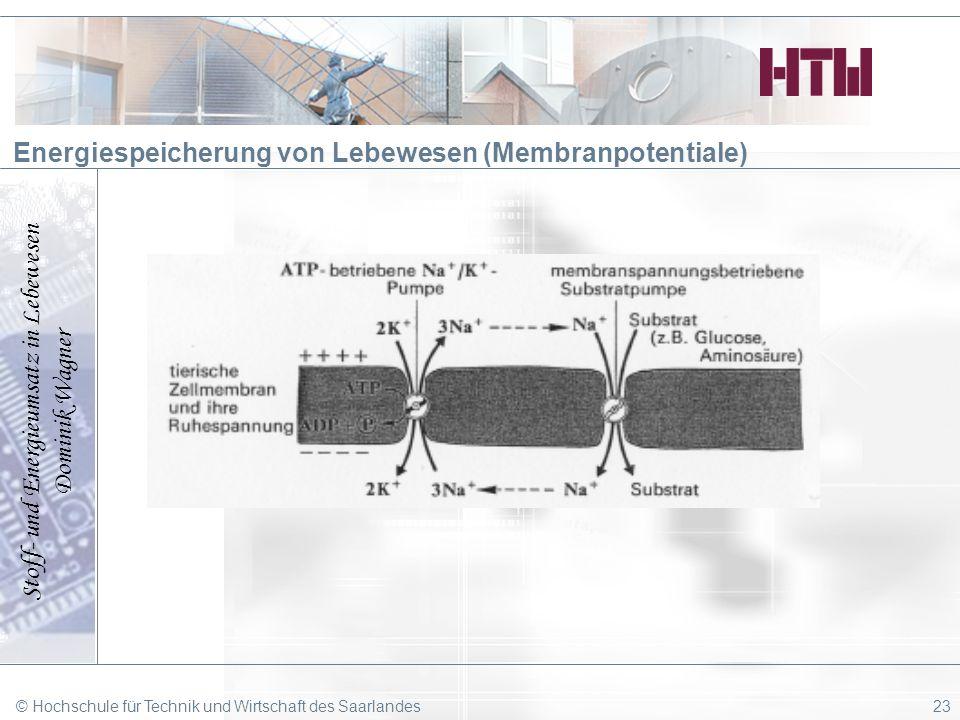Stoff- und Energieumsatz in Lebewesen Dominik Wagner © Hochschule für Technik und Wirtschaft des Saarlandes23 Energiespeicherung von Lebewesen (Membra