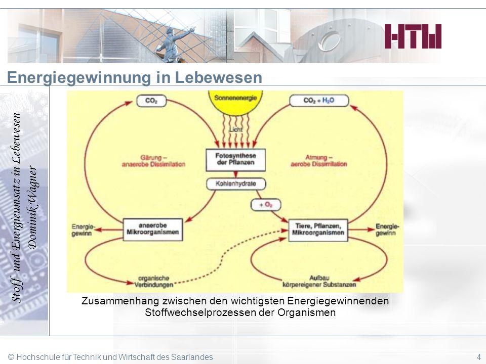 Stoff- und Energieumsatz in Lebewesen Dominik Wagner © Hochschule für Technik und Wirtschaft des Saarlandes4 Energiegewinnung in Lebewesen Zusammenhan