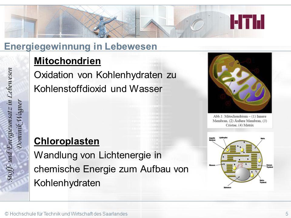 Stoff- und Energieumsatz in Lebewesen Dominik Wagner © Hochschule für Technik und Wirtschaft des Saarlandes5 Energiegewinnung in Lebewesen Mitochondri