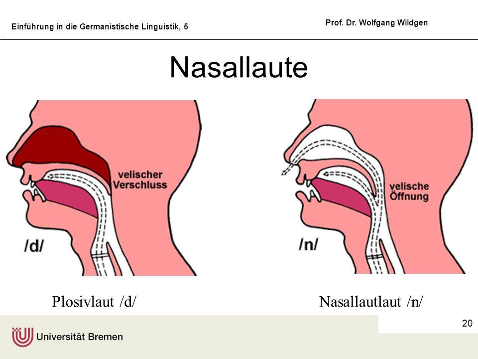 Einführung in die Germanistische Linguistik, 5 Prof. Dr. Wolfgang Wildgen 20 Nasallaute Plosivlaut /d/Nasallautlaut /n/