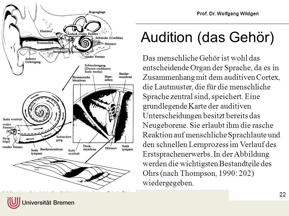 Einführung in die Germanistische Linguistik, 5 Prof. Dr. Wolfgang Wildgen 22 Audition (das Gehör) Das menschliche Gehör ist wohl das entscheidende Org