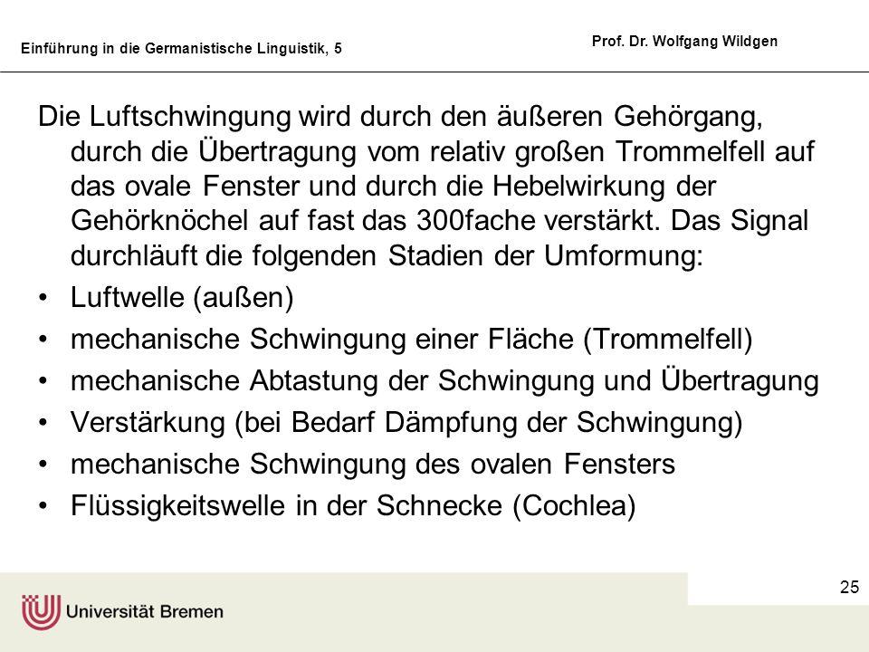 Einführung in die Germanistische Linguistik, 5 Prof. Dr. Wolfgang Wildgen 25 Die Luftschwingung wird durch den äußeren Gehörgang, durch die Übertragun
