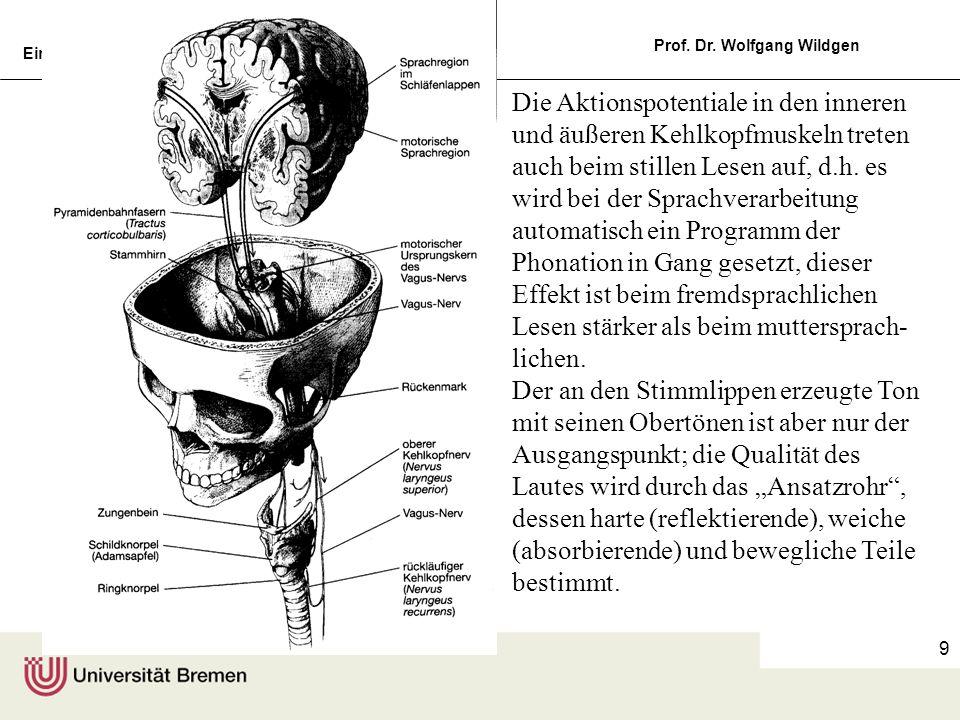 Einführung in die Germanistische Linguistik, 5 Prof. Dr. Wolfgang Wildgen 9 Die Aktionspotentiale in den inneren und äußeren Kehlkopfmuskeln treten au