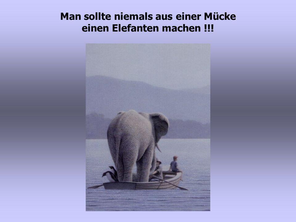 Man sollte niemals aus einer Mücke einen Elefanten machen !!!