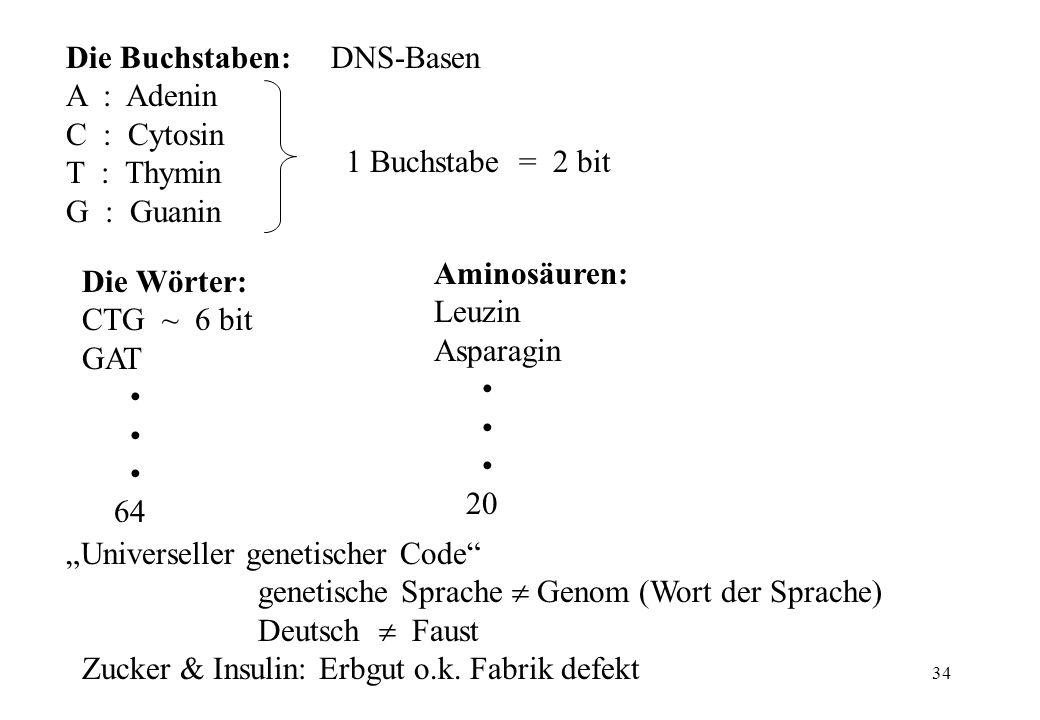 34 Die Buchstaben: DNS-Basen A : Adenin C : Cytosin T : Thymin G : Guanin 1 Buchstabe = 2 bit Die Wörter: CTG ~ 6 bit GAT 64 Aminosäuren: Leuzin Aspar