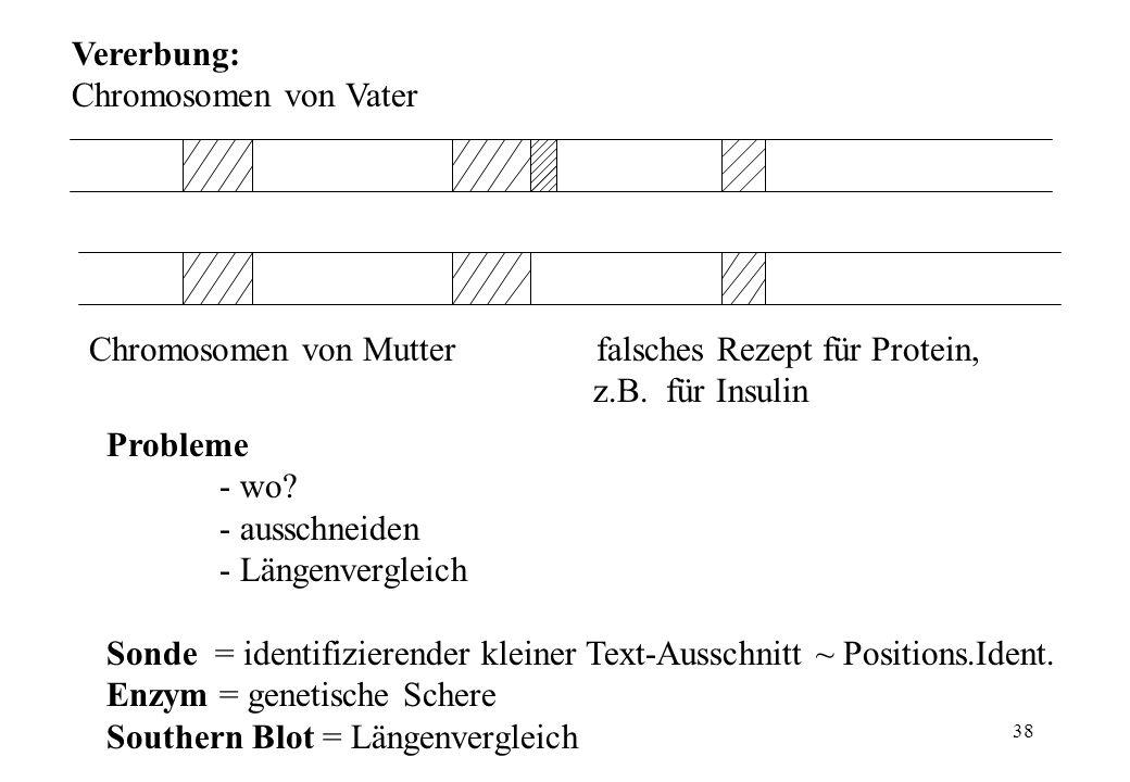 38 Probleme - wo? - ausschneiden - Längenvergleich Vererbung: Chromosomen von Vater Chromosomen von Mutter falsches Rezept für Protein, z.B. für Insul