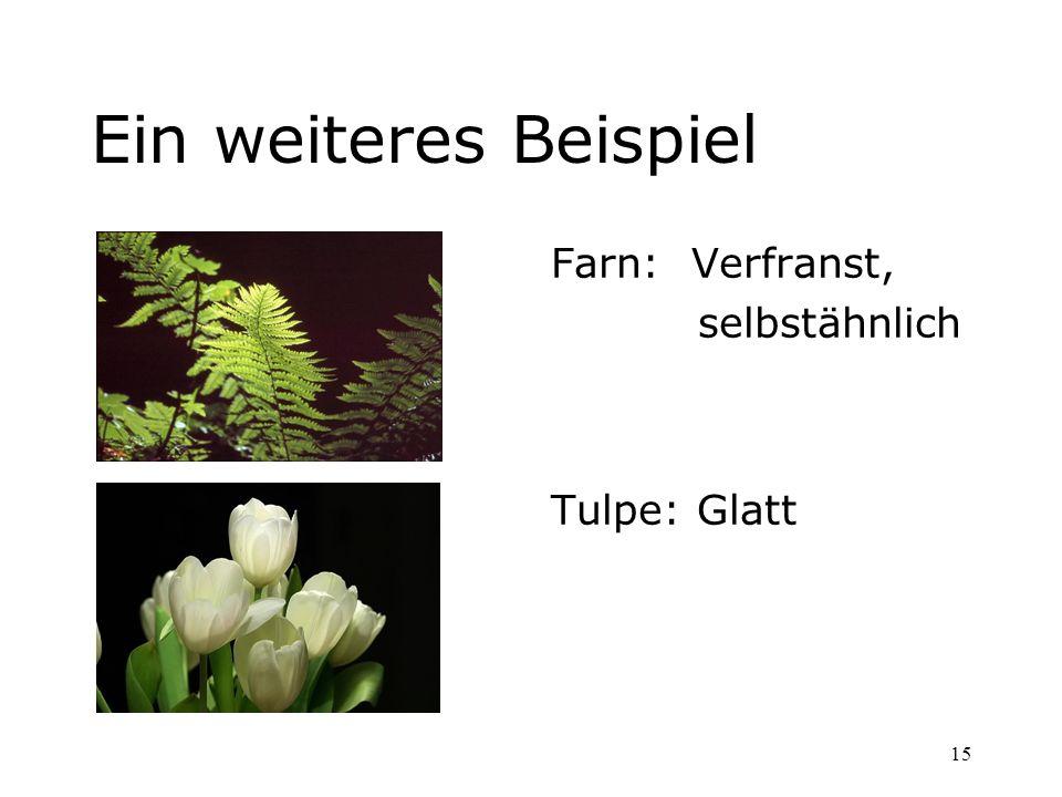 15 Ein weiteres Beispiel Farn: Verfranst, selbstähnlich Tulpe: Glatt