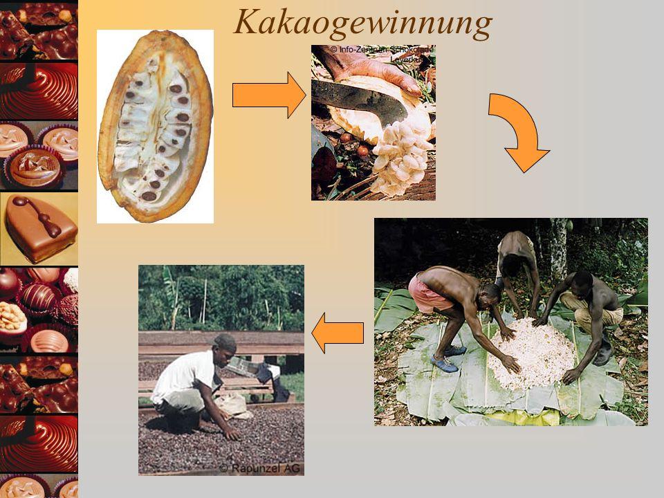 Schokoladenherstellung Kakaobutter Kakaokuchen