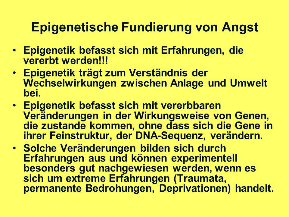 Epigenetische Fundierung von Angst (2) Solche Erfahrungen bringen in den Zellen (nicht im Zellkern!) biochemische Prozesse in Gang, welche die Wirksamkeit bestimmter Gen-Orte in der DNA-Sequenz (im Zellkern!) blockieren oder freisetzen.