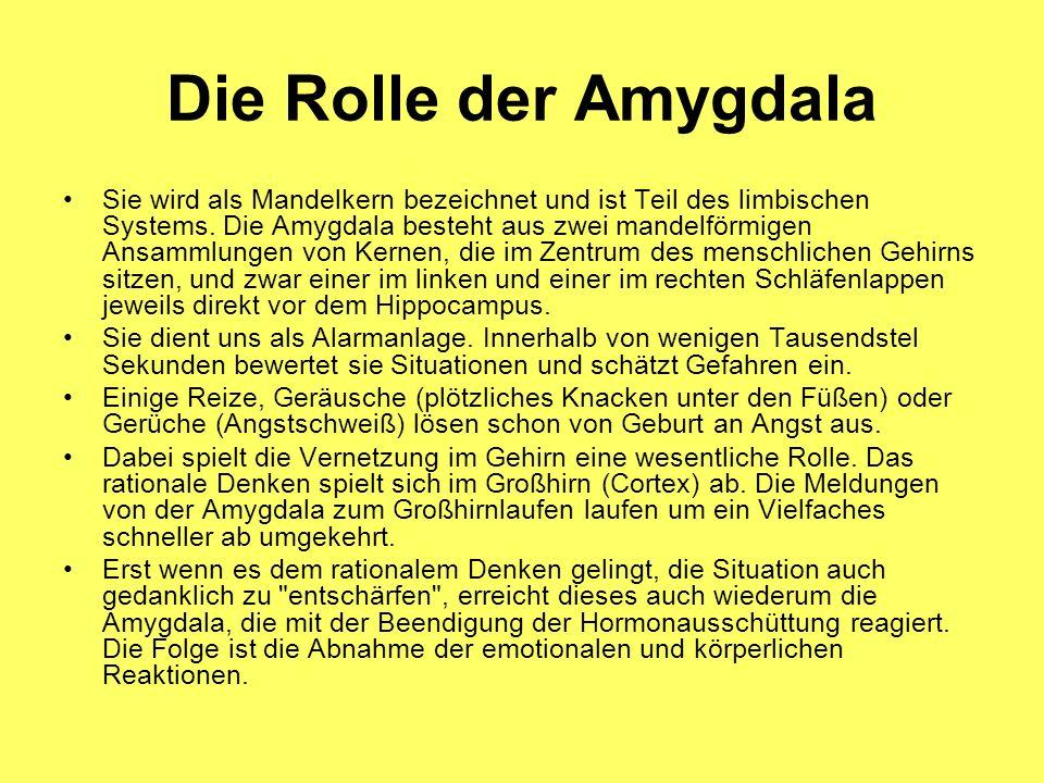 Die Rolle der Amygdala Sie wird als Mandelkern bezeichnet und ist Teil des limbischen Systems. Die Amygdala besteht aus zwei mandelförmigen Ansammlung