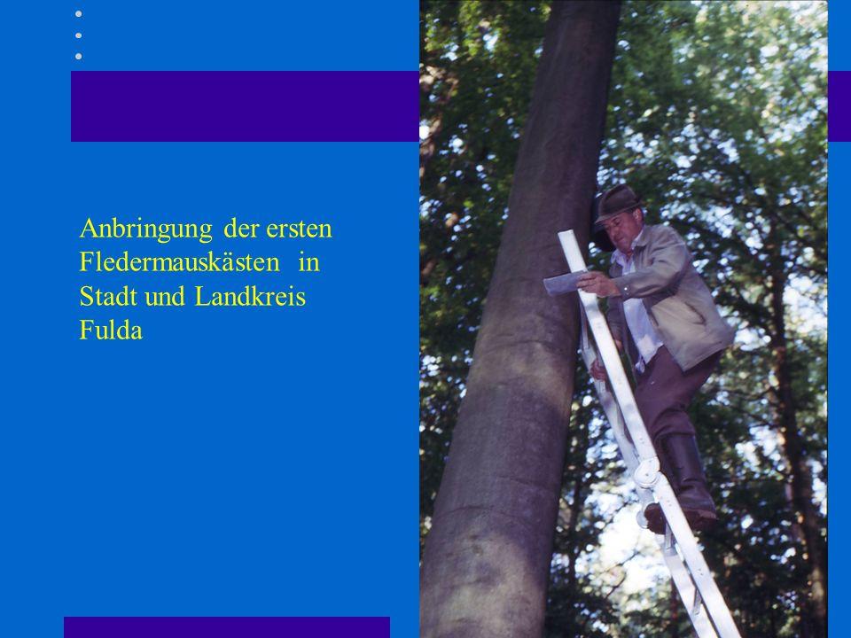 Anbringung der ersten Fledermauskästen in Stadt und Landkreis Fulda