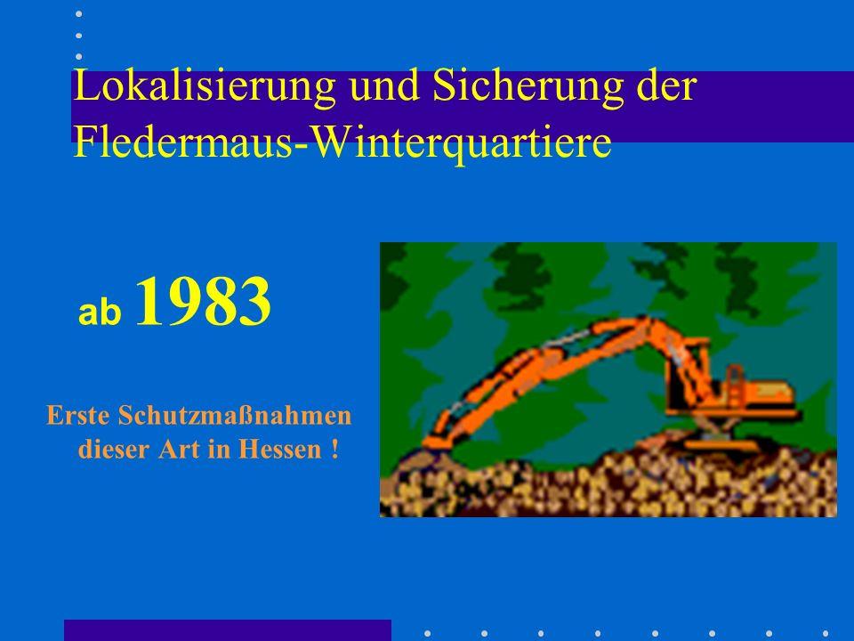 Lokalisierung und Sicherung der Fledermaus-Winterquartiere ab 1983 Erste Schutzmaßnahmen dieser Art in Hessen !