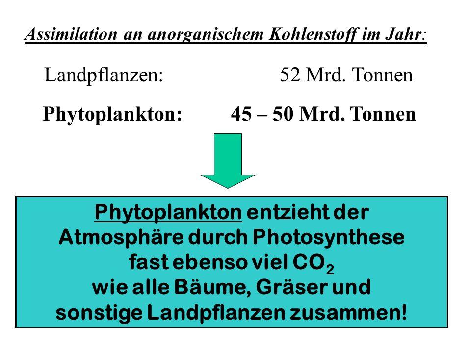 Assimilation an anorganischem Kohlenstoff im Jahr: Landpflanzen:52 Mrd. Tonnen Phytoplankton:45 – 50 Mrd. Tonnen Phytoplankton entzieht der Atmosphäre