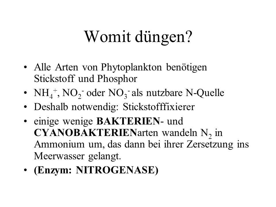 Womit düngen? Alle Arten von Phytoplankton benötigen Stickstoff und Phosphor NH 4 +, NO 2 - oder NO 3 - als nutzbare N-Quelle Deshalb notwendig: Stick