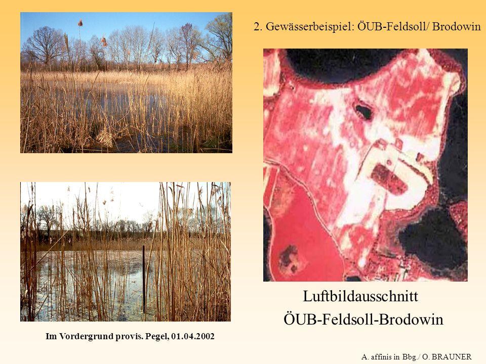 Luftbildausschnitt ÖUB-Feldsoll-Brodowin Im Vordergrund provis. Pegel, 01.04.2002 A. affinis in Bbg./ O. BRAUNER 2. Gewässerbeispiel: ÖUB-Feldsoll/ Br