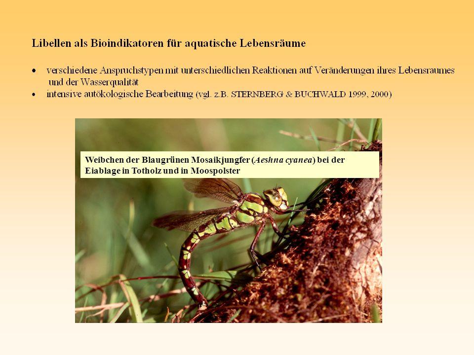 Exuvien-PF II, 06.07.02 (insb.P. australis, J. effusus, C.
