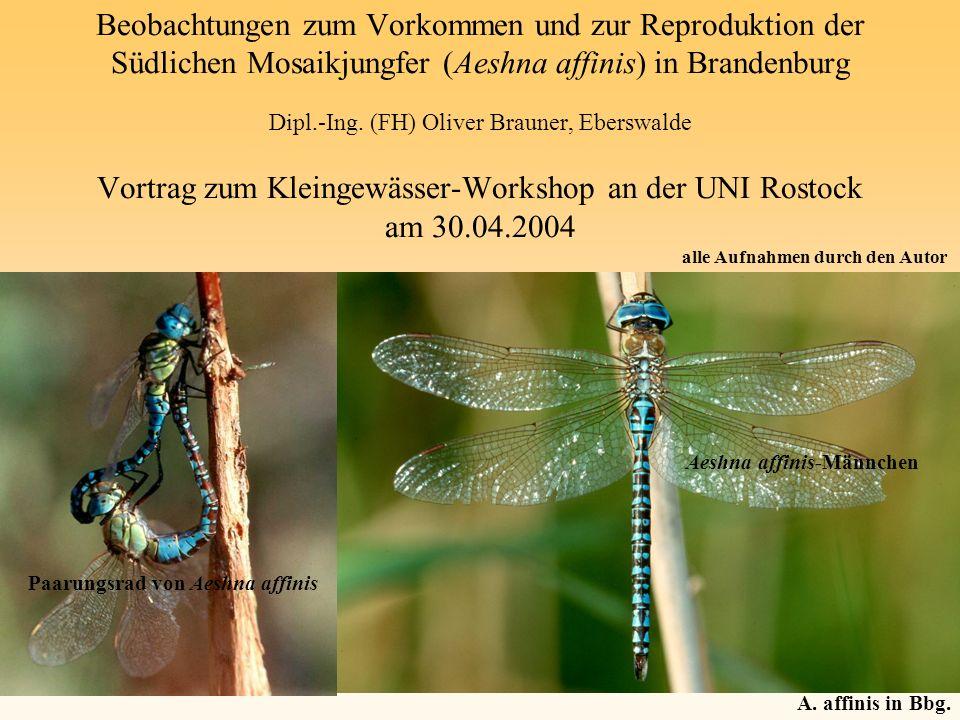 Beobachtungen zum Vorkommen und zur Reproduktion der Südlichen Mosaikjungfer (Aeshna affinis) in Brandenburg Dipl.-Ing. (FH) Oliver Brauner, Eberswald