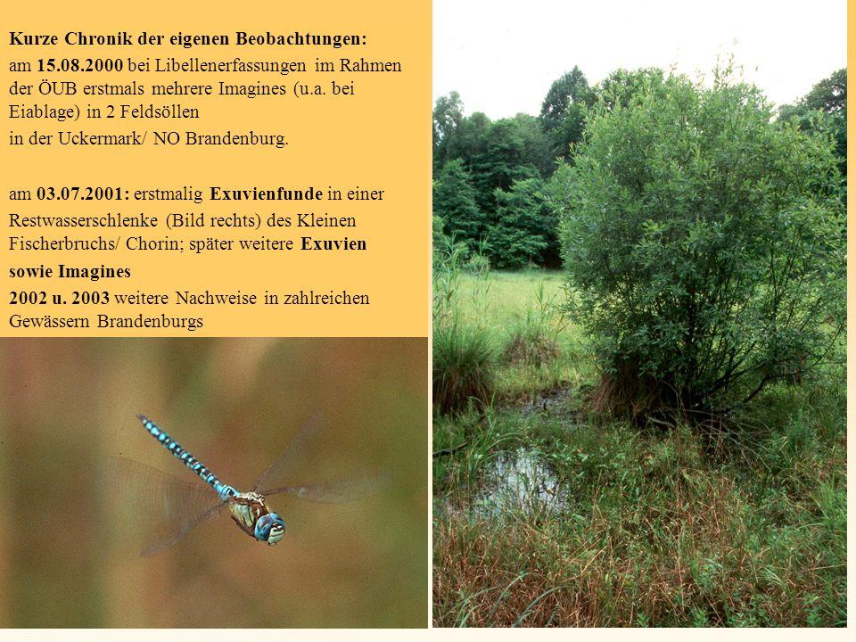 Kurze Chronik der eigenen Beobachtungen: am 15.08.2000 bei Libellenerfassungen im Rahmen der ÖUB erstmals mehrere Imagines (u.a. bei Eiablage) in 2 Fe