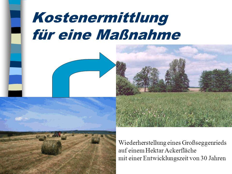 Kostenermittlung für eine Maßnahme Wiederherstellung eines Großseggenrieds auf einem Hektar Ackerfläche mit einer Entwicklungszeit von 30 Jahren