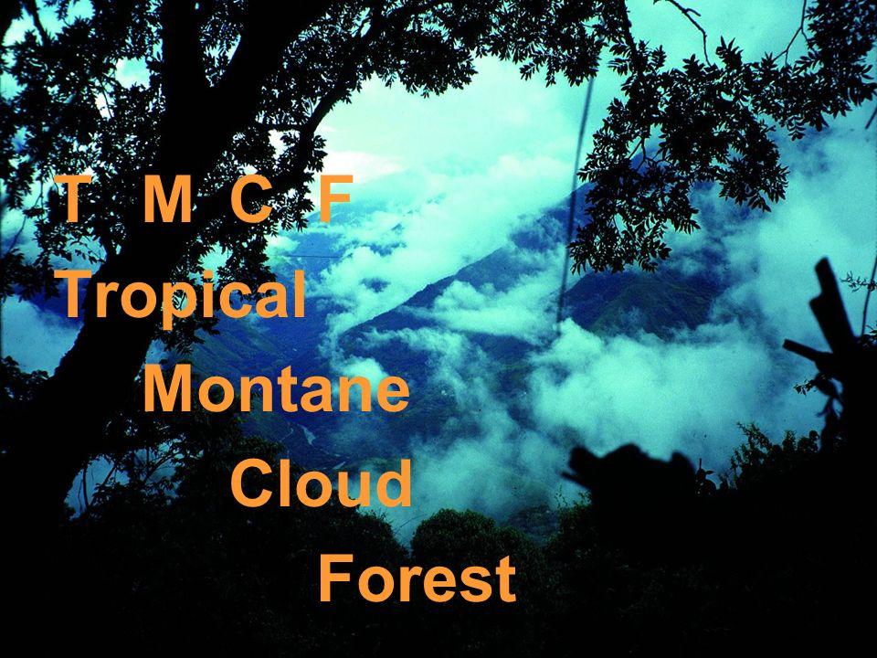 TMCFTMCF Tropical Montane Cloud Forest