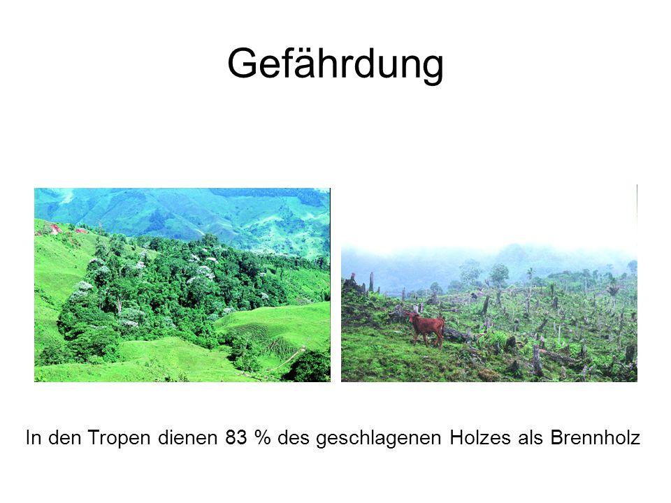 Gefährdung In den Tropen dienen 83 % des geschlagenen Holzes als Brennholz