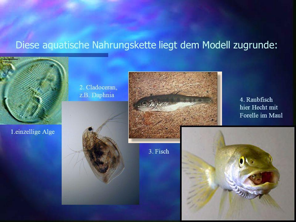 Diese aquatische Nahrungskette liegt dem Modell zugrunde: 1.einzellige Alge 2. Cladoceran, z.B. Daphnia 3. Fisch 4. Raubfisch hier Hecht mit Forelle i