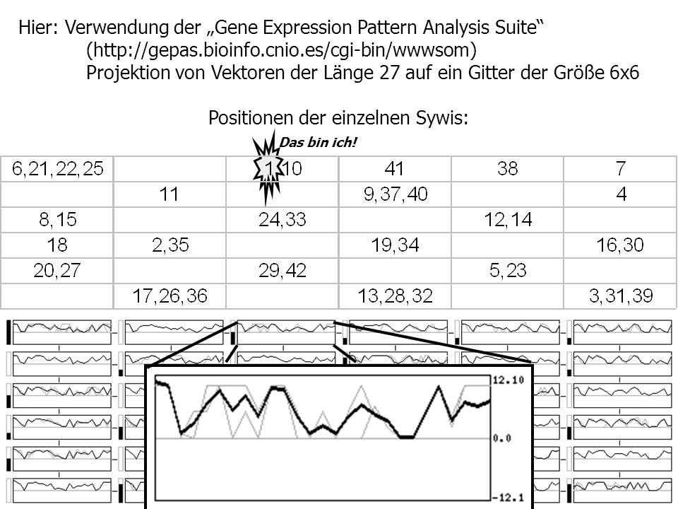 Hier: Verwendung der Gene Expression Pattern Analysis Suite (http://gepas.bioinfo.cnio.es/cgi-bin/wwwsom) Projektion von Vektoren der Länge 27 auf ein