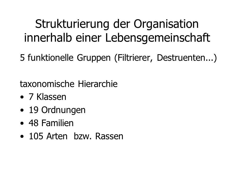 Strukturierung der Organisation innerhalb einer Lebensgemeinschaft 5 funktionelle Gruppen (Filtrierer, Destruenten...) taxonomische Hierarchie 7 Klassen 19 Ordnungen 48 Familien 105 Arten bzw.