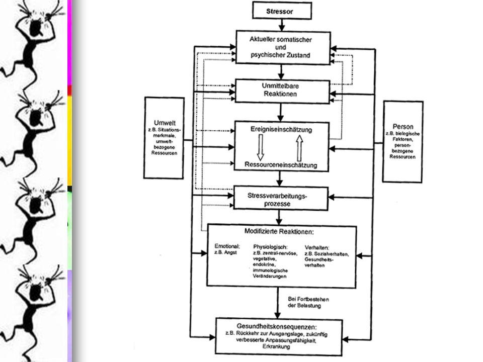 Interpretation Emotionsregulierende Bewältigung und Problemlösende Bewältigung Ausgewogenes Verhältnis Emotionsregulierende Bewältigung und Problemlösende Bewältigung Ausgewogenes Verhältnis Hoher Ausprägung in Negativer Stressverarbeitung Hoher Ausprägung in Negativer Stressverarbeitung überprüfen, welche der Strategien dafür verantwortlich ist überprüfen, welche der Strategien dafür verantwortlich ist