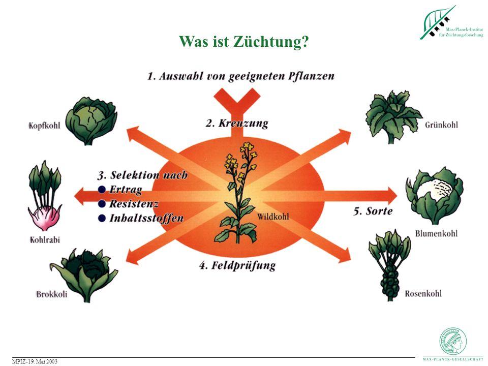 MPIZ-19.Mai 2003 Wie funktioniert Pflanzenzüchtung.