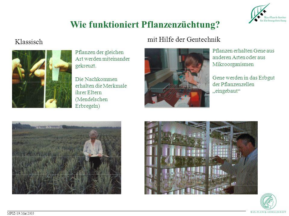 MPIZ-19. Mai 2003 Wie funktioniert Pflanzenzüchtung?
