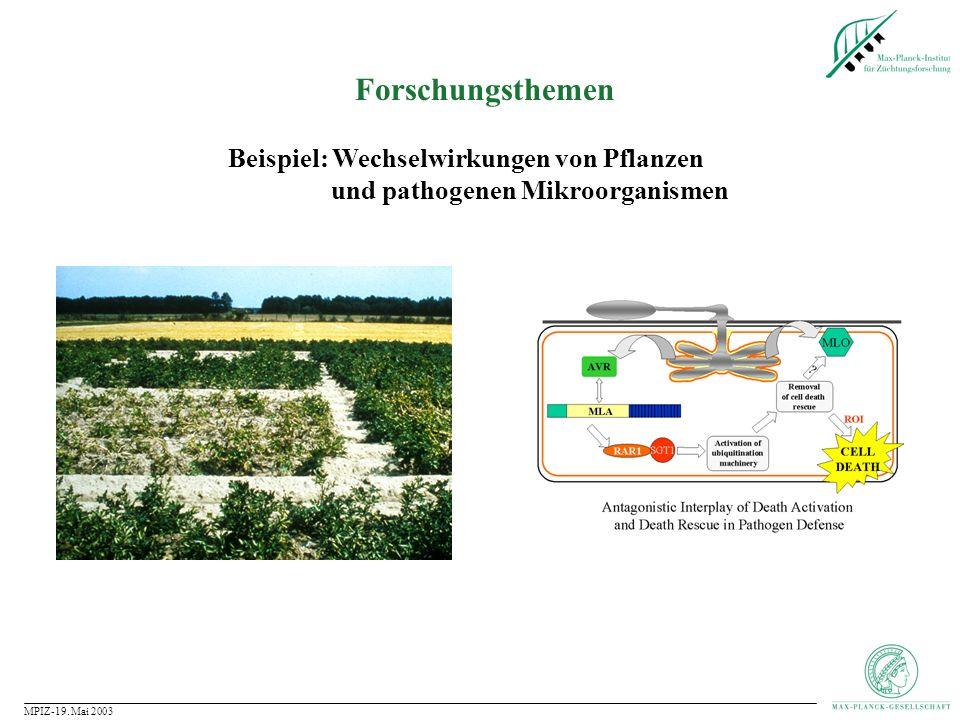 MPIZ-19.Mai 2003 Forschungsthemen Beispiel: Wie wird die innere Uhr von Pflanzen gesteuert.