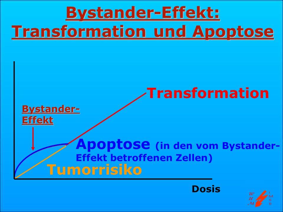Bystander-Effekt: Transformation und Apoptose Transformation Apoptose (in den vom Bystander- Effekt betroffenen Zellen) Tumorrisiko Dosis Bystander- E
