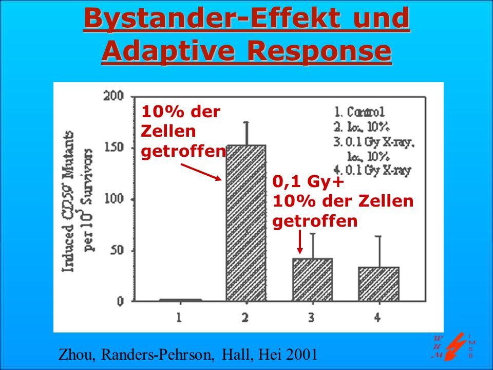 Bystander-Effekt und Adaptive Response 10% der Zellen getroffen 0,1 Gy+ 10% der Zellen getroffen Zhou, Randers-Pehrson, Hall, Hei 2001