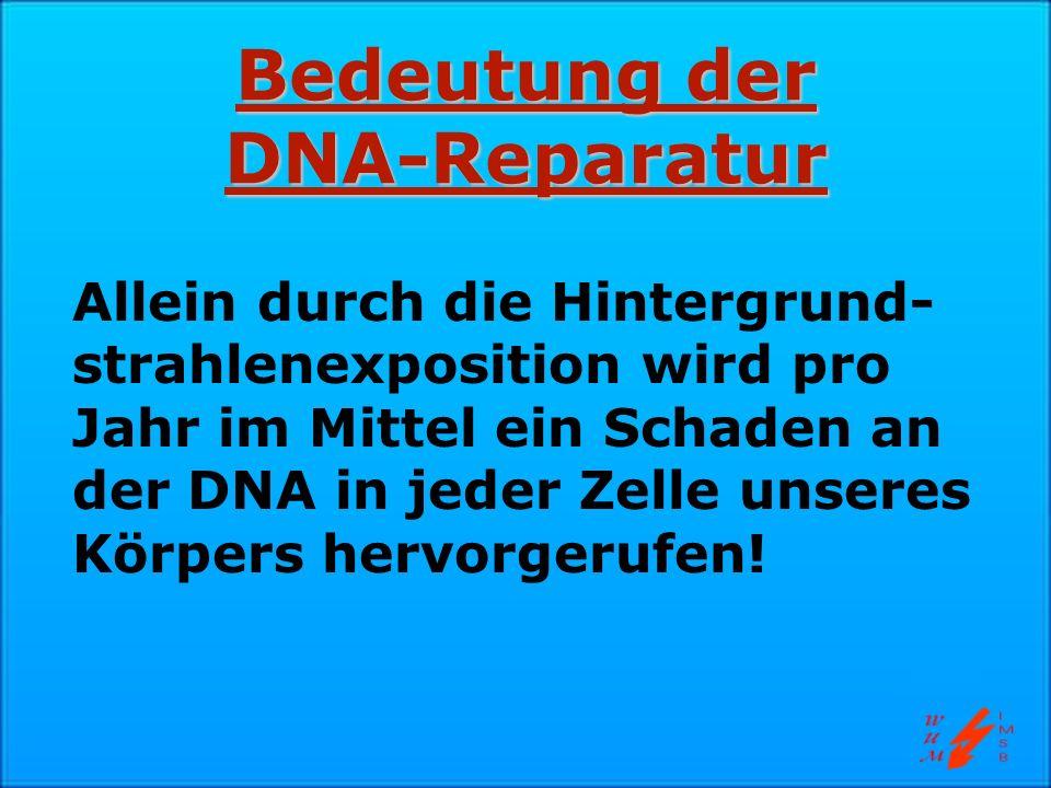 Bedeutung der DNA-Reparatur Allein durch die Hintergrund- strahlenexposition wird pro Jahr im Mittel ein Schaden an der DNA in jeder Zelle unseres Kör